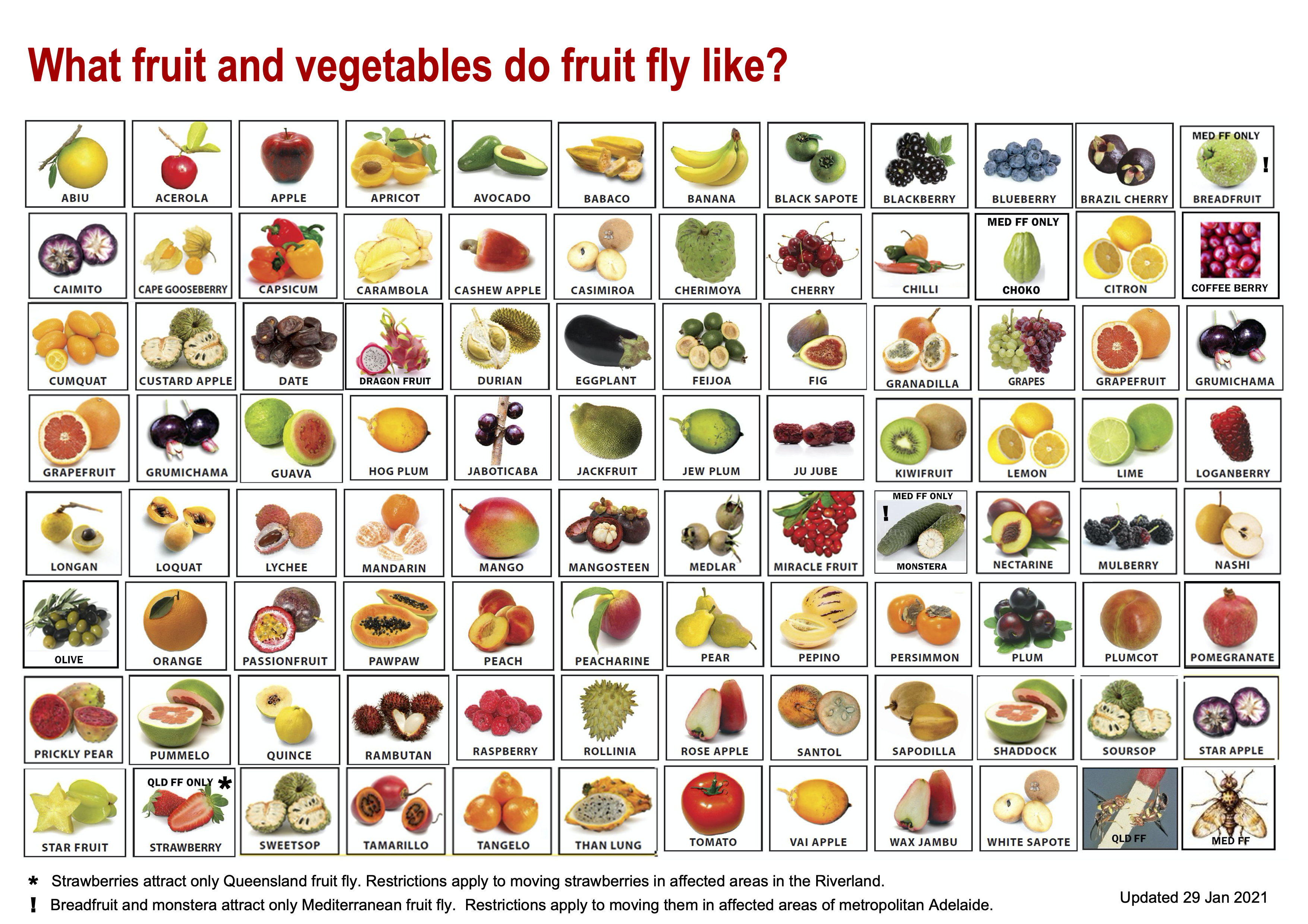 Fruit Fly Foods